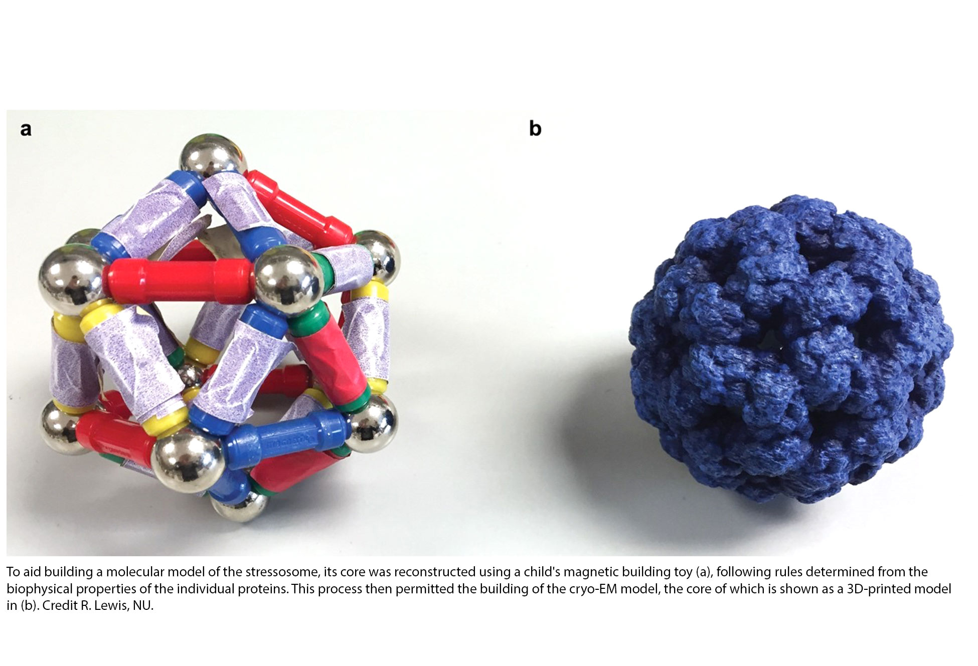 stressosome molecular model