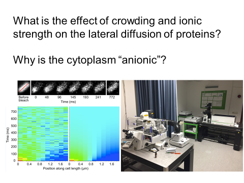 lateral diffusion of proteins